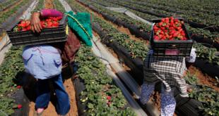 اطاك المغرب السيادة الغذائية